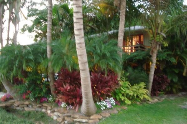danford - tropical landscape