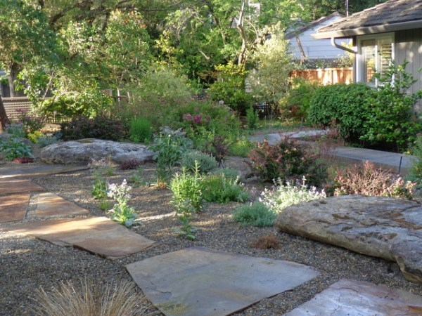 drought tolerant maintenance