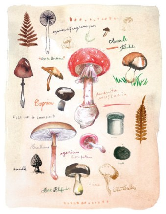 An illustrated guide to mushrooms. (Credit: houzz.com)