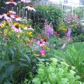 Backyard perennial garden traditional landscape chicago by in