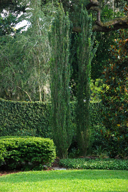 French Country Style Garden Traditional Landscape
