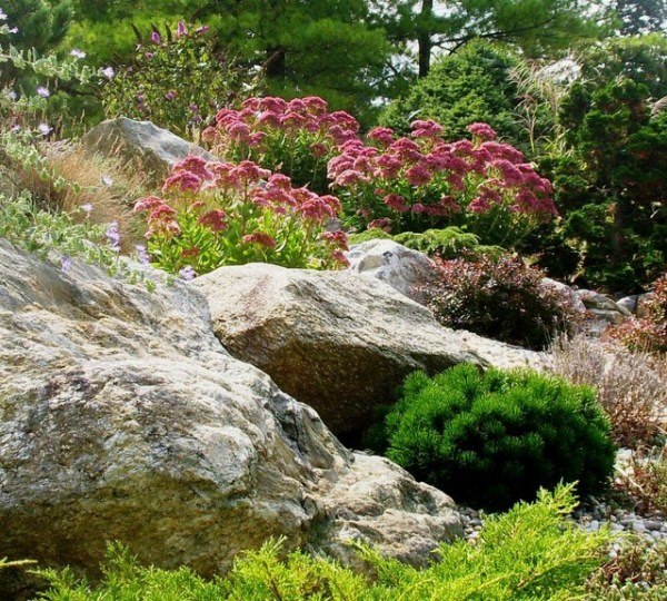 rock garden - contemporary landscape