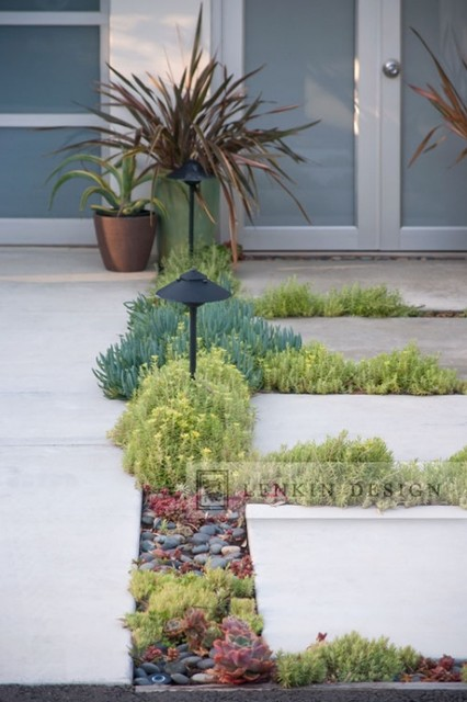 modern pavers planted with succulents