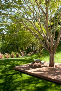 Landscaping-wood patio under trees
