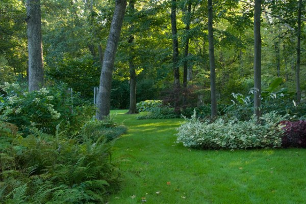 woodland shade garden - contemporary