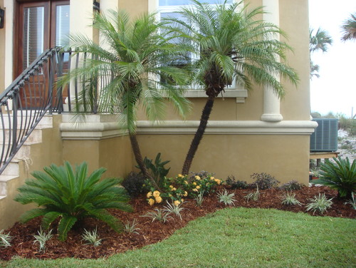 "small palm ""bush"""