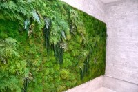 The Joy of Moss and Its Modern Uses