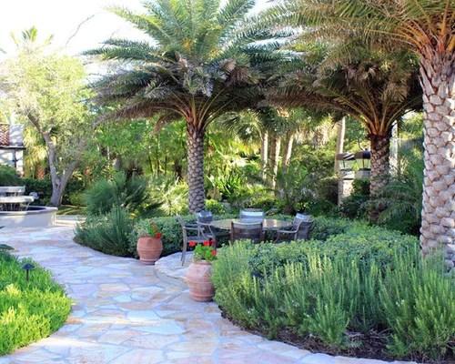 palm tree landscape ideas