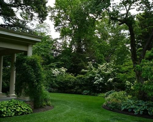 evergreen privacy shrubs