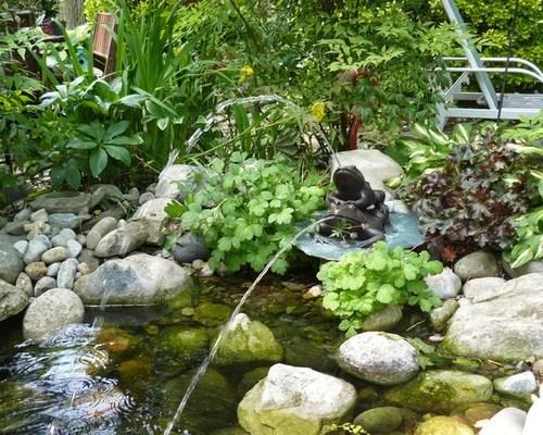 Best Plants Around Pond