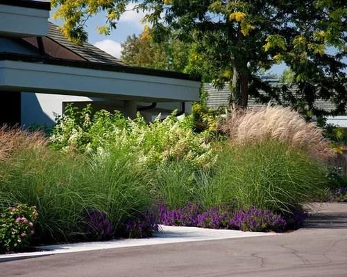 Pampas Grass  Houzz