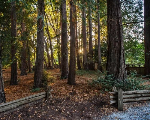 keeping natural wooded area