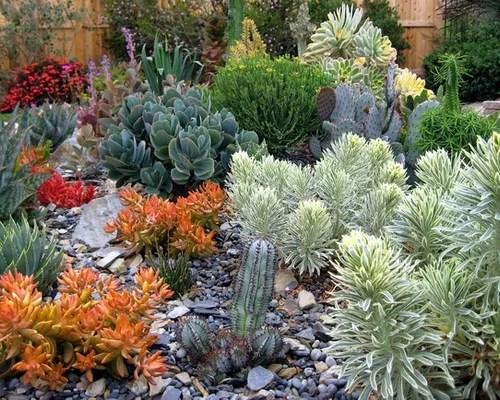 Cactus Garden Ideas Houzz