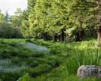 Natural Landscape | Houzz