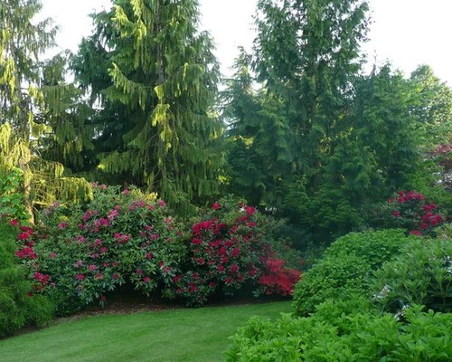 landscaping privacy trees