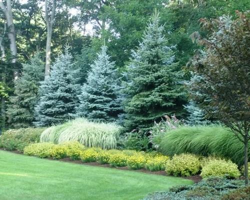 evergreen border home design ideas