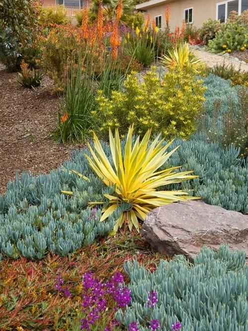 Yucca Houzz