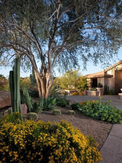 backyard desert landscaping home