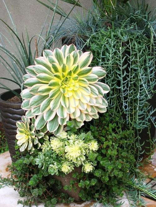 Succulent Container Garden Houzz
