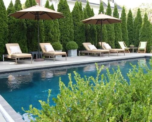 pool privacy trees shrubs