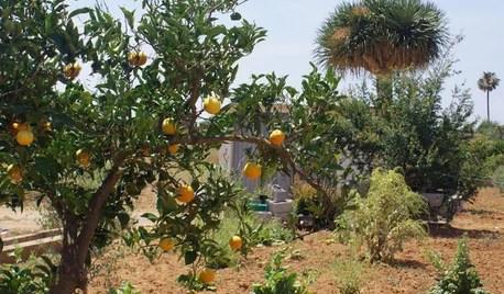 Jardín de la semana: Un verano entre naranjos en Castellón