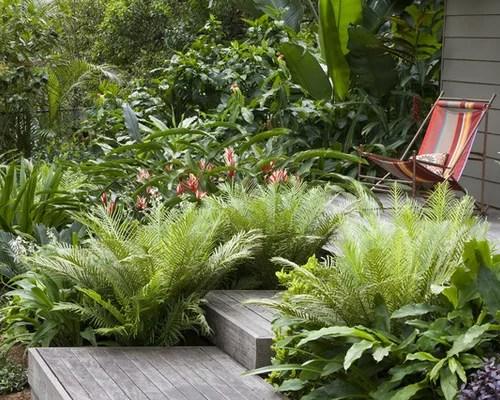 Fern Garden Ideas Pictures Remodel And Decor