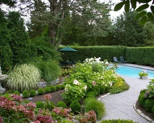 evergreen ornamental grasses