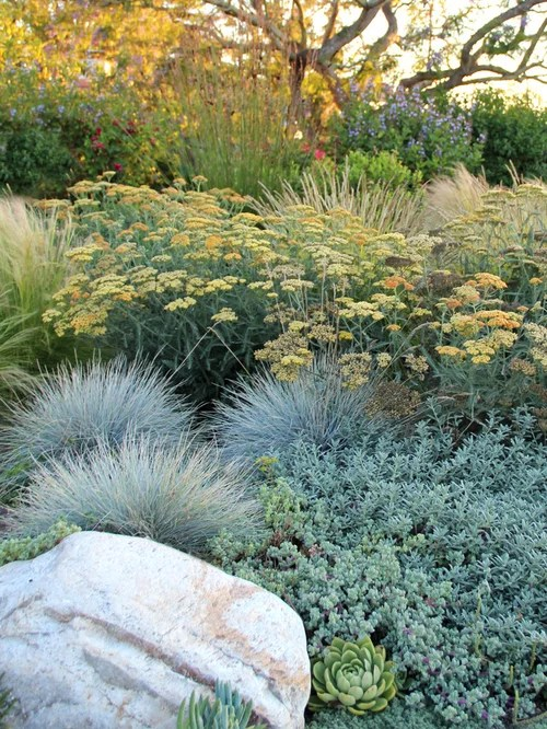 Dry Garden Ideas Pictures Remodel And Decor