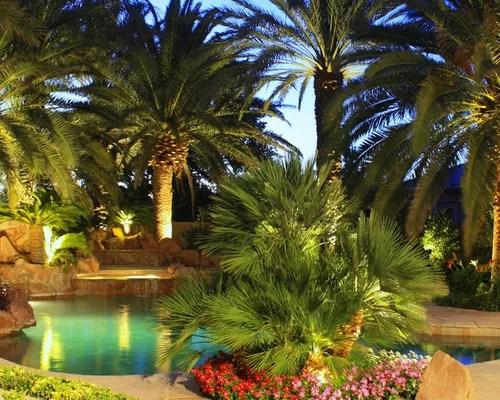 tropical las vegas landscape ideas