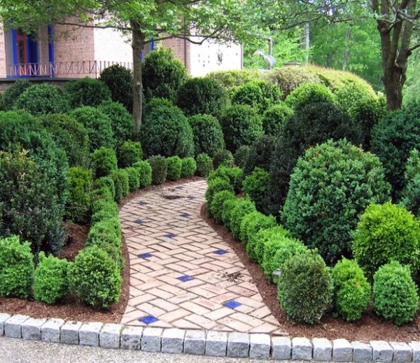 8 deer-resistant elegant evergreen