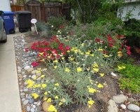Colorful, Drought Tolerant, Low Maintenance Frontyard and ...