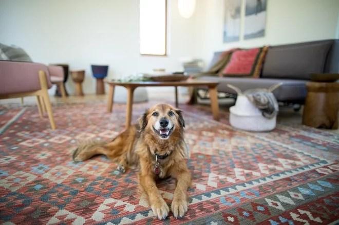Traditional Living Room by Quinn Morgan Design