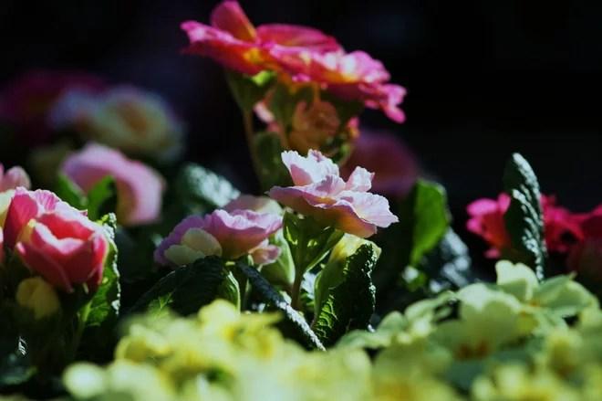 Giardino by Laara Copley-Smith Garden & Landscape Design