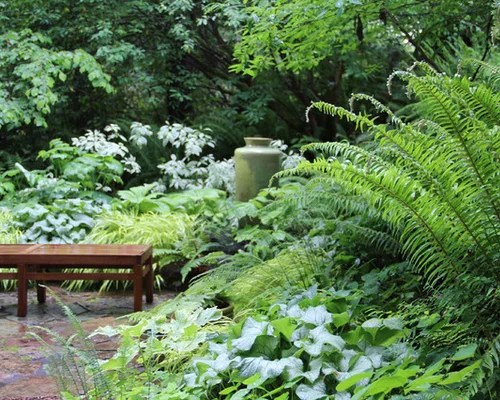 Fern Garden Houzz