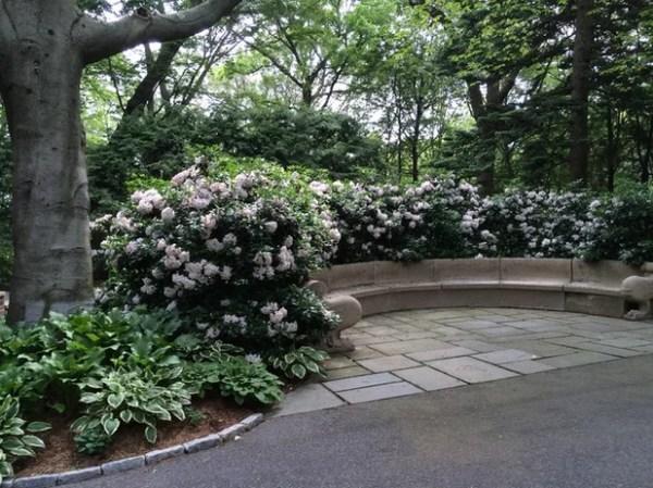 essential shrubs mid-atlantic