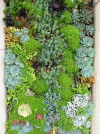Succulent Garden | Houzz