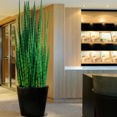 Artificial Trees For Living Room Furnishings And Design Plants Ideas & Remodel Pictures | Houzz