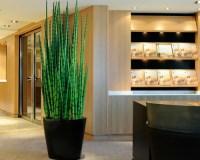 Artificial Plants   Houzz