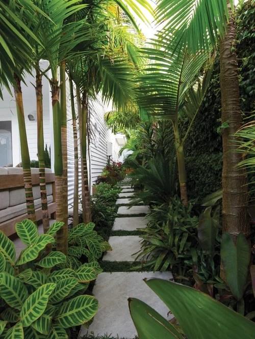 tropical garden landscaping