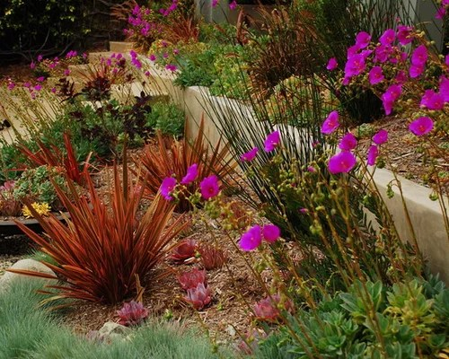drought tolerant plant northern