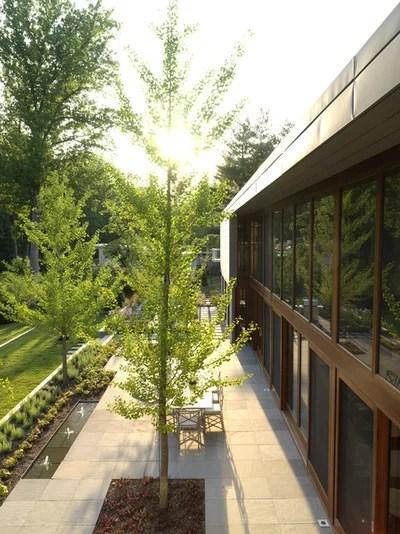 great design plant ginkgo biloba