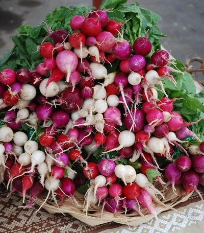 How to Grow Radishes Houzz