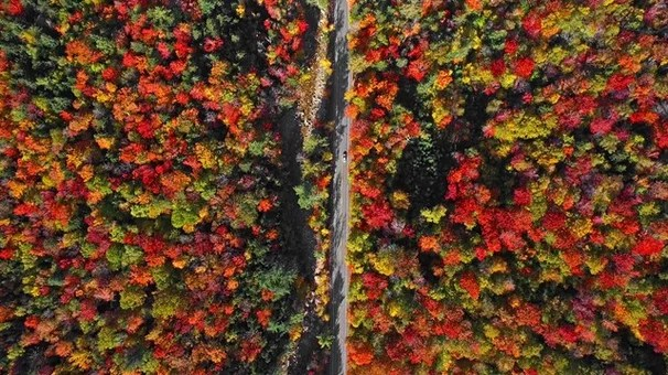 Houzz Tv This Drone Video Of Autumn In New England Will