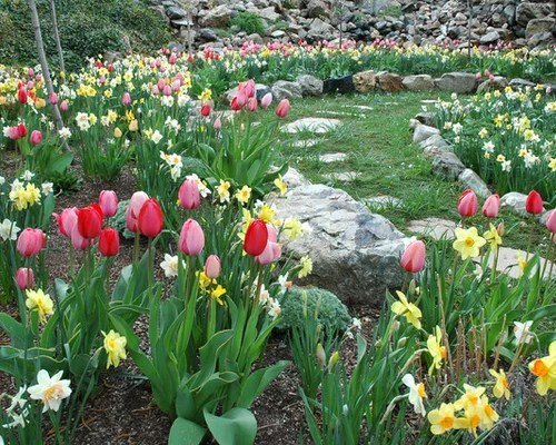 spring bulb garden home design