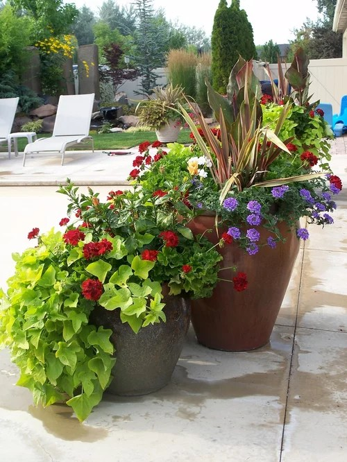 Summer Container Plants Houzz