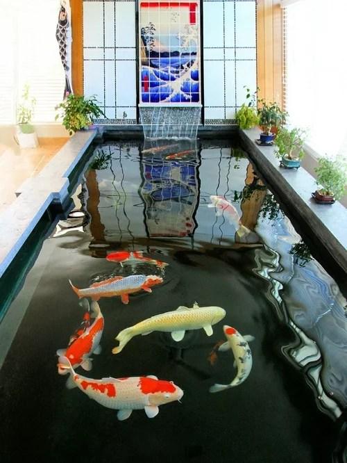 Indoor Koi Pond  Houzz