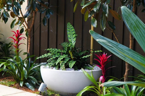 Top 10 Flowering Plants For Subtropical Gardens