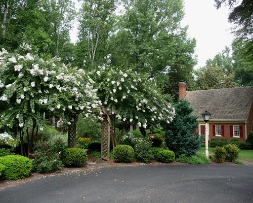crepe myrtle landscaping home design