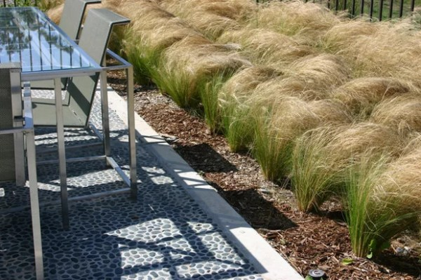 ornamental grasses in landscape