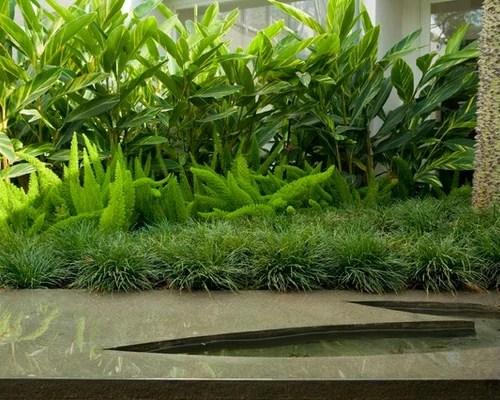 Subtropical Garden Houzz